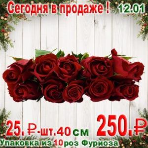 """5% скидка на товар по акции не распространяется. Мы продаем упаковку из 10 кенийских роз """"Фуриоза"""" длиной 40 см, г. Санкт-петербург. Новые скидки и распродажи."""