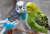 Мы предоставляем скидки по карте которая выдается при покупках от 3000 рублей. Уже сегодня у нас большое поступление птиц, г. Котлас.