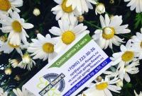 Сетей, мы постоянно проводим акции, дарим скидки и другие бонусы: - цветы оптом, г. Санкт-петербург. У нас большие скидки.