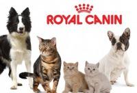 """Сумасшедшие скидки до 3 0% на сухой корм """"Royal Canin"""" для кошек котят собак и щенков. Таких выгодных цен вы не надейте, г. Санкт-петербург."""