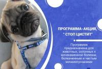 """Стоимость по программе скидка 10% на весь пакет услуг. Программа - акция """"Стоп Цистит"""" - ветеринарная клиника аверс, г. Москва. Для вас действуют скидки."""