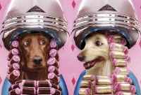 Мы напоминаем о том что продолжает действовать акция приведи друга и получи скидку на стрижку собаки 20%, г. Санкт-петербург. Новый день скидок.