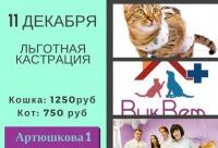 Лучшая скидка 50%. 11. Декабря мы объявляем днем льготной кастрации в клинике на Артюшкова 1, г. Краснодар. Большие скидки.