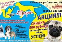 """Последние 2 дня скидка на стерилизацию собаки - ветеринарная клиника """"Тигра"""" Кыштым."""