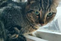 Наш котик Лео потеряшка_мега с нетерпением ждёт своего человека, г. Краснодар. Вам мы предоставим скидку.