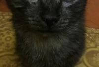 Стерилизация со скидкой 50%. Мы ищем теплый дом с хорошими хозяевами для кошек, г. Учалы.