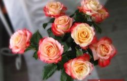 Крупная яркая роза Кабаре - восхитительный букет со скидкой 50%, Пермь
